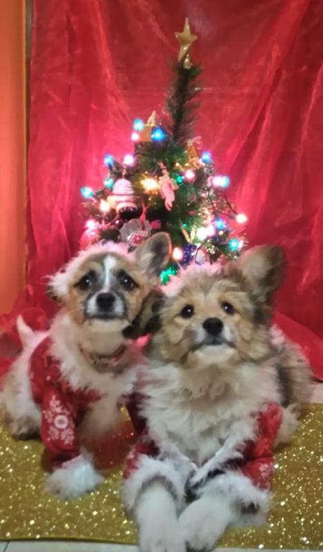 Primera navidad de Bimba y Lola