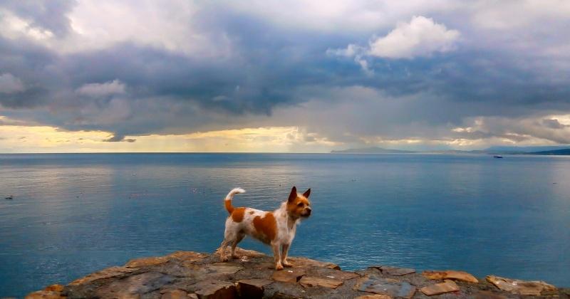 Paty en un mar azul